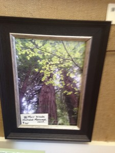 12x16 Muir Woods National Monument - $75